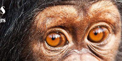 Centre de Conservation pour Chimpanzés (C.C.C.)