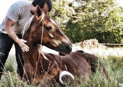 L'arrêt LUNUS : Le décès d'un animal est il constitutif d'un préjudice moral ?