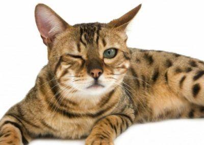 Le colloque « Les chats du troisième millénaire »