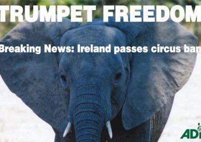 L'Irlande interdit les animaux sauvages dans les cirques !