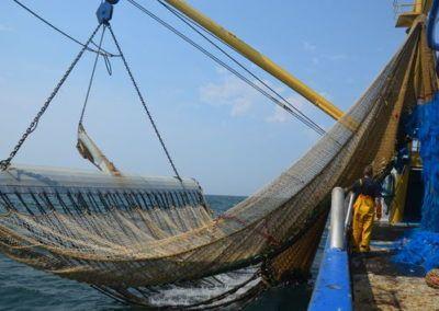 « L'Europe ouvre la voie à la très décriée pêche électrique »