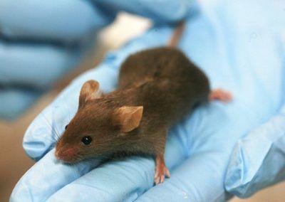 Maltraitance animale dans la recherche biomédicale : Animal Testing et Libération diffusent des scènes prises par une lanceuse d'alerte dans un laboratoire public