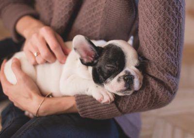 À l'hôpital d'Amiens les chiens sont de vrais thérapeutes