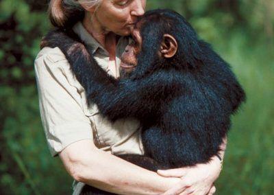 Jane Goodall : ses grandes découvertes et son combat pour la défense de l'environnement