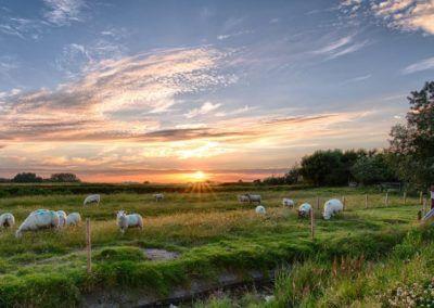 Succès des mesures de protection des troupeaux en Valais