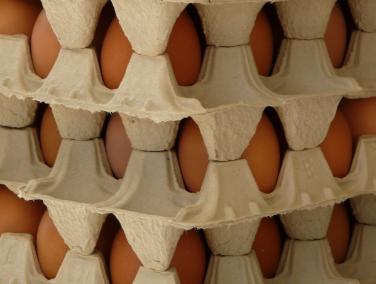 Le gouvernement confirme la fin des œufs issus d'élevages en batterie d'ici 2022