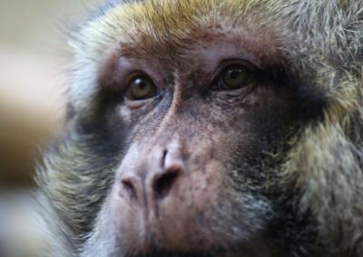 « Arrêtons de nous croire supérieurs aux animaux »
