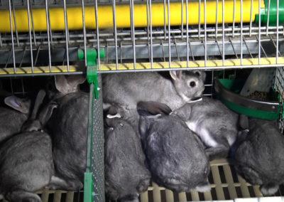 «Où en est l'élevage d'animaux à fourrure en France ?»