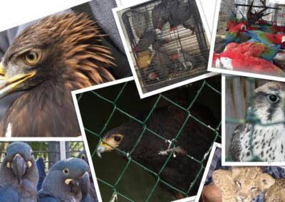Non au nouvel «arrêté fixant les règles générales de détention d'animaux d'espèces non domestiques»