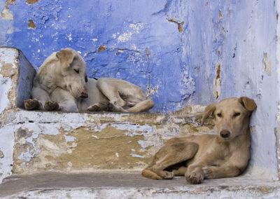 Agadir : des chiens errants ont été abattus avant la venue de la FIFA