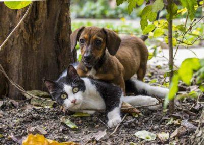 L'extraction des animaux de la catégorie des biens par la loi du 16 février 2015