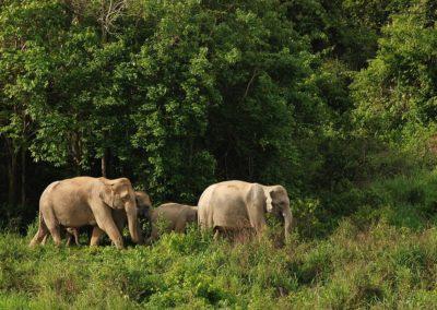 « Elephant Haven » : le premier sanctuaire pour éléphants en Europe