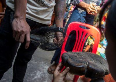 Birmanie : le braconnage des éléphants s'intensifie