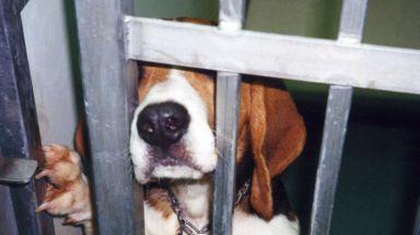 One Voice demande la fermeture de l'élevage de chiens de laboratoire de Mézilles