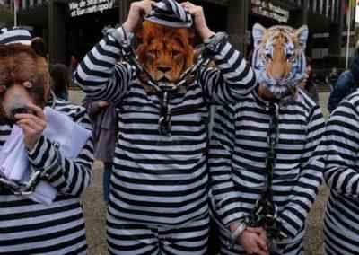 Strasbourg interdit les cirques avec animaux sauvages !