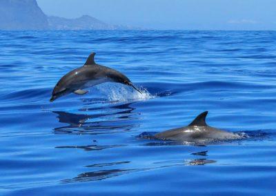 La création de sanctuaires marins pour cétacés est à l'étude