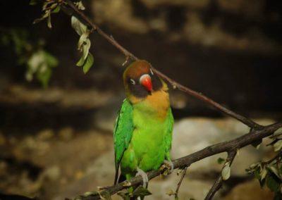 « Le commerce d'oiseaux sauvages a diminué de 90 % en 12 ans »