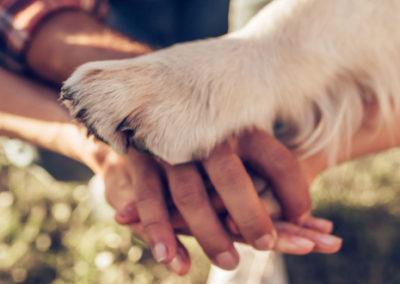 #Animaux Soigneurs : la Fondation Affinity récompense quatre projets de médiation animale
