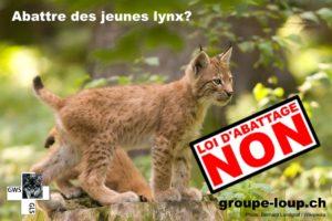 Suisse : vers un affaiblissement de la protection des espèces