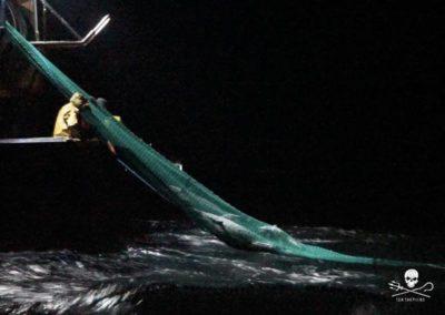 Consultation publique pour les dauphins victimes de la pêche