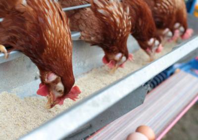 Loi sur la protection animale : Le Luxembourg reconnaît les animaux comme doués d'une dignité