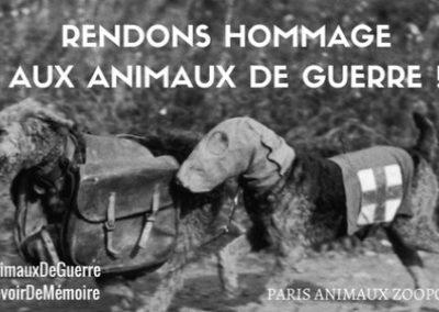 Le Conseil de Paris refuse le projet d'un mémorial aux animaux morts durant la Première Guerre mondiale