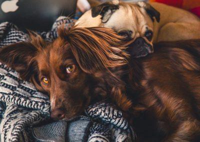 La Wallonie et la Flandre donnent les exemples à suivre en matière de protection animale
