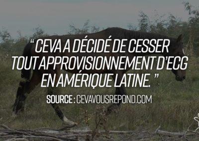 Première victoire pour les juments des fermes à sang d'Amérique du Sud