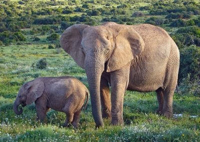 Botswana : le « pire épisode de braconnage d'éléphants en Afrique »