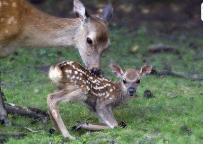 Pétition : Pour une réforme radicale de la chasse