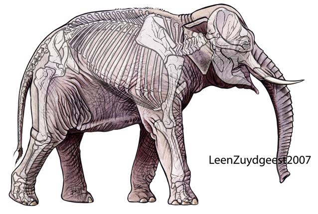 regime alimentaire de l elephant