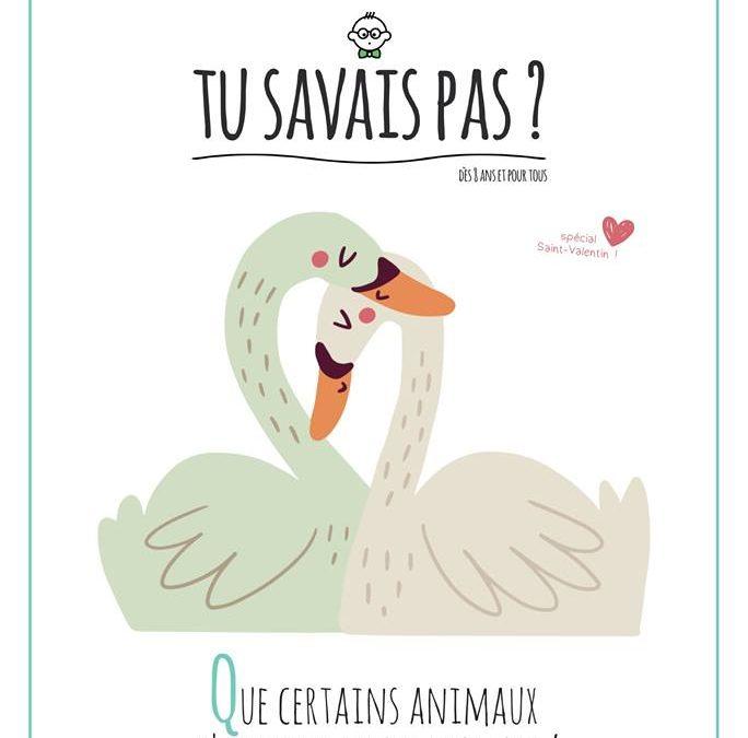 TU SAVAIS PAS ? n°20 Que certains animaux s'aiment toute leur vie !