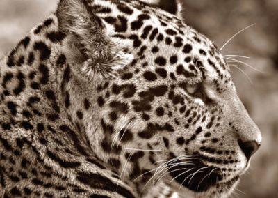 Le Brésil et le Botswana envisagent de légaliser la chasse aux animaux sauvages