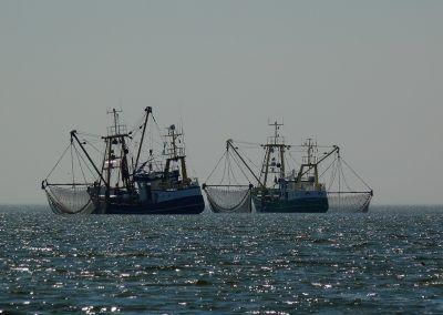 La France devance l'Europe et interdit la pêche électrique dans ses eaux territoriales