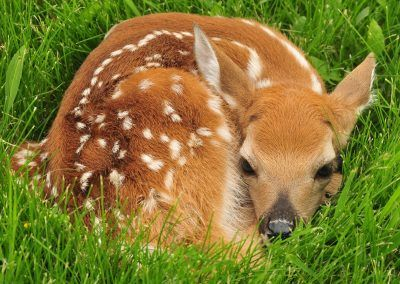 La biodiversité à protéger