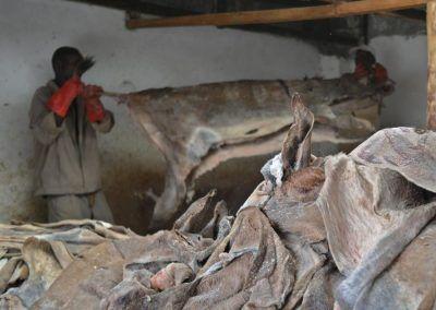 Abattage des ânes au Kenya