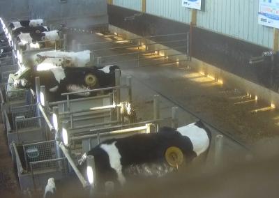Un hublot sur une vache