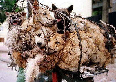 Chine : le festival de l'horreur continue