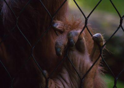 Un réseau international de trafic de milliers d'animaux sauvages démantelé