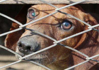 Une proposition de loi pour que cesse l'abandon d'animaux en France