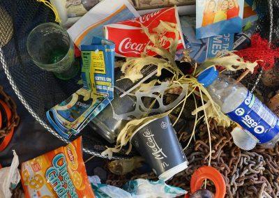 Les déchets plastiques… un véritable fléau pour la faune marine