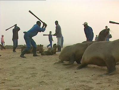 La Namibie massacre sans vergogne ses otaries