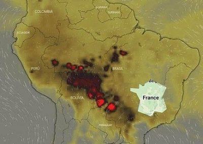 L'Amazonie brûle et la biodiversité disparaît