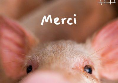 1 554 317 signatures pour interdire l'élevage en cage en Europe !