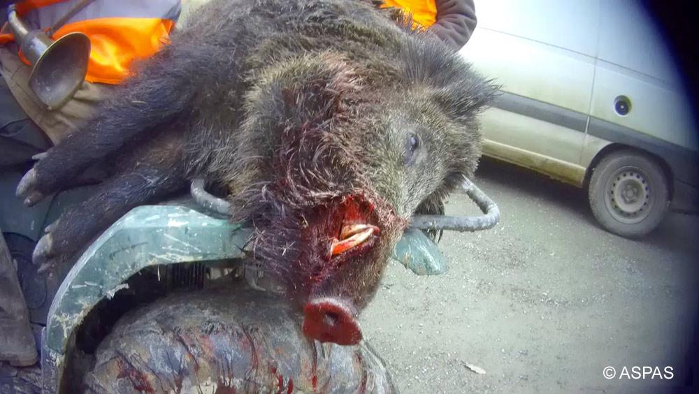 Enclos et parcs d'animaux sauvages : le ball-trap des chasseurs