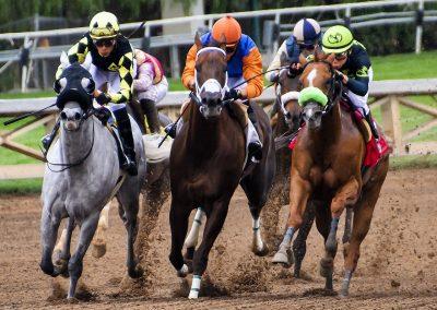 Abattage de chevaux de courses à l'échelle industrielle en Australie