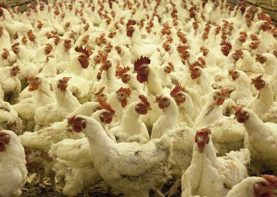 De plus en plus de grandes enseignes engagées dans le bien-être animal