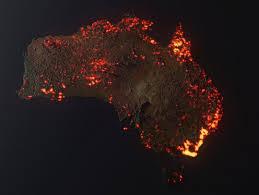 Incendies en Australie : un drame pour la faune sauvage