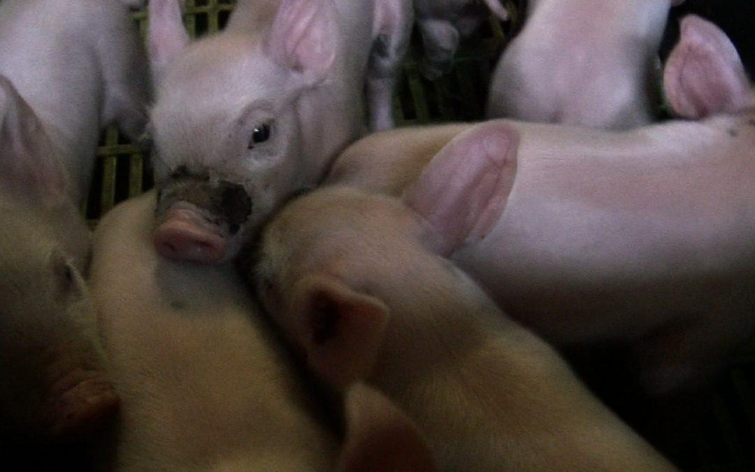 Plan gouvernemental sur le bien-être animal : tout ça pour ça…