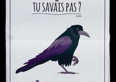 TU SAVAIS PAS? n°35 Que les corbeaux sont les plus intelligents des oiseaux !